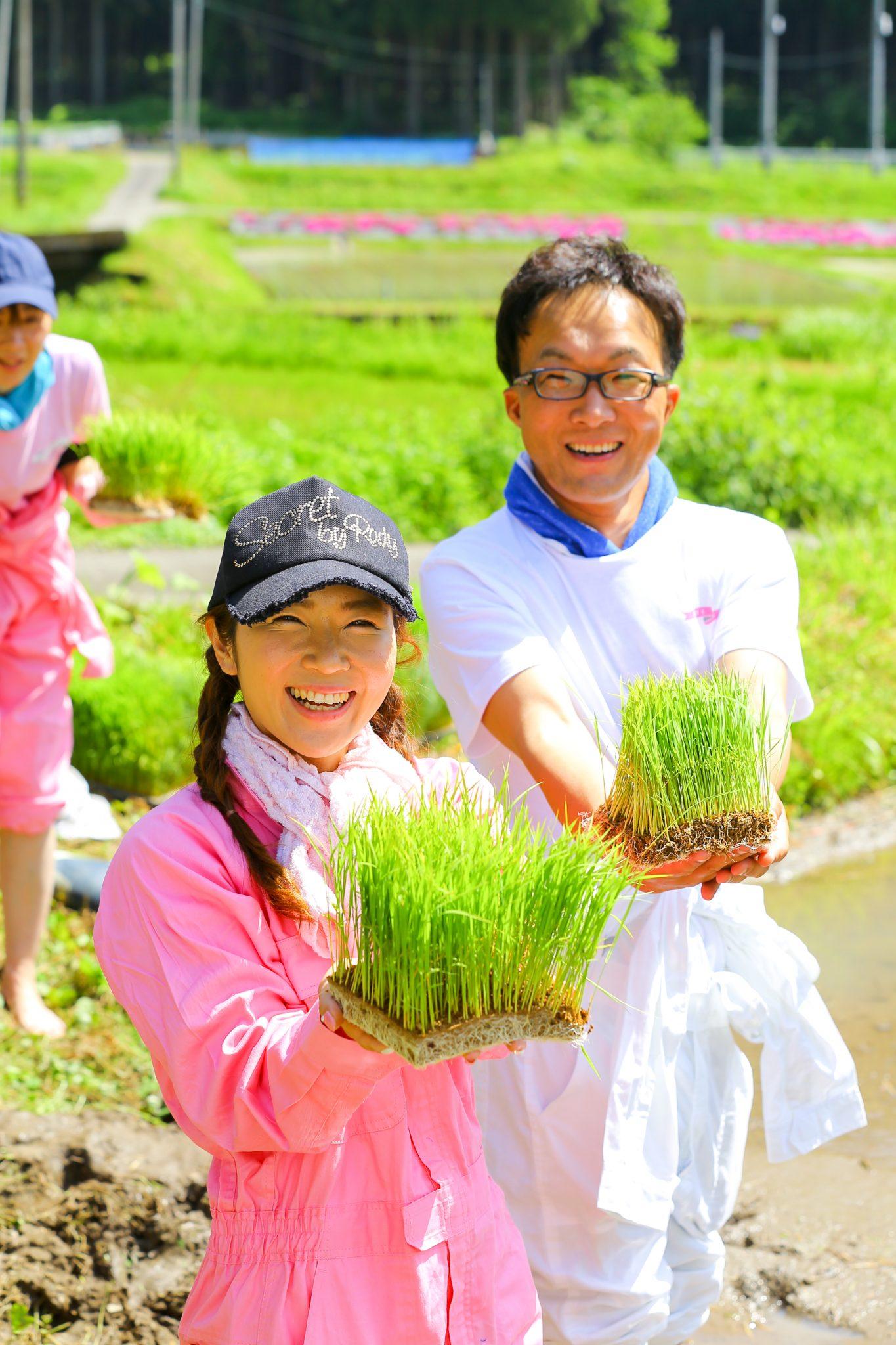 ピロール米の田植えをしました。